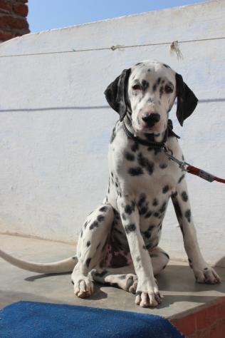 Surendra's dog RV
