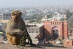Monkey Temple, Galta