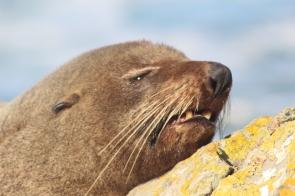 Seal @ East Coast