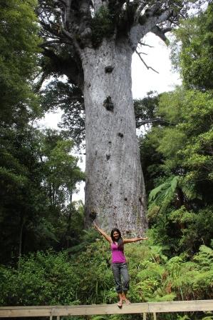 Oldest Kaori tree in NZ - Tane Mahuta, Lord of the Forest