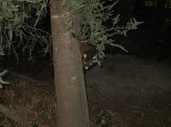 A wicked possum...