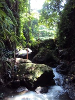 Balinese rainforests