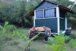 The jungle hut