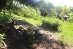 The jungle cabin