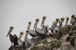 The highly wildlife populated 'Islas Ballestas'