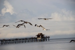 The Naples century-old wooden pier