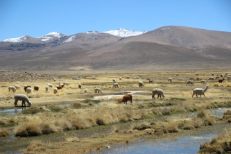 Wetlands of Tocra