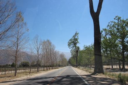 The wine region of Cafayate